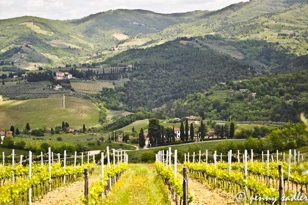 vineyard Panzano in Chianti @PennySadler 2013