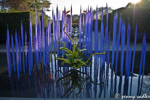 Chihuly  Dallas Arboretum ©pennysadler 2012